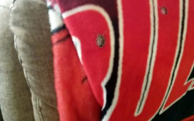 Get Rid of Stink Bugs in Your RV
