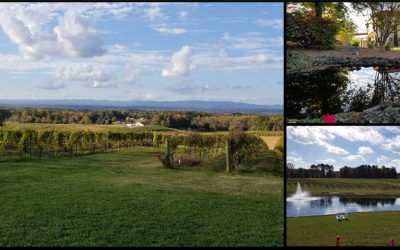 Too Many Vineyards to Count – Yadkin Valley NC