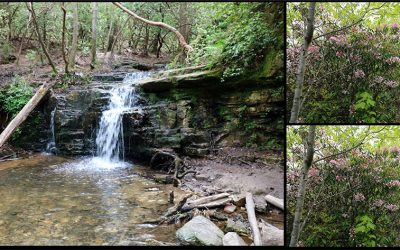 Pine Mountain Trail – Hiking Wolfden Loop